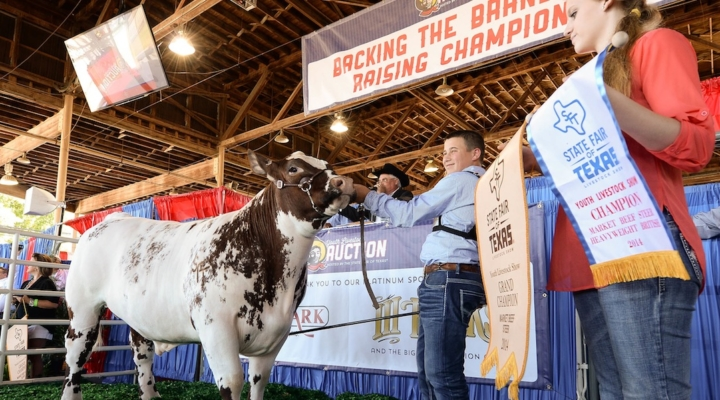 Top steer sets new record