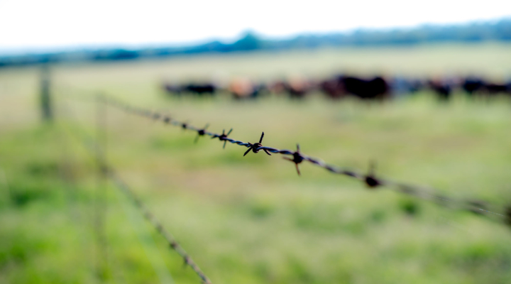 Texas ranchers may have avoided devastation