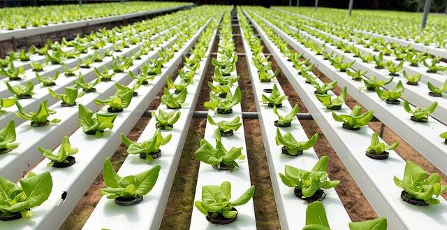Organic industry in turmoil?