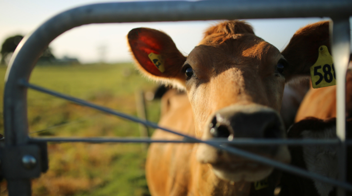 U.S. cautions Japan to respect dairy trade