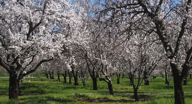 2-week UC orchard management course