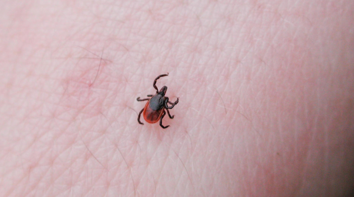 Tick testing available at UConn