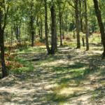 kentucky forest