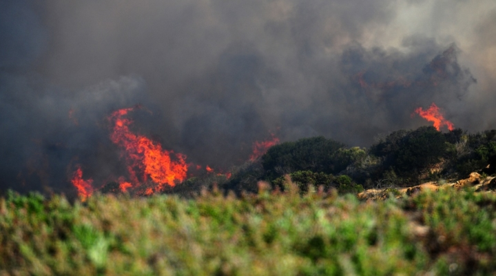 Smoke, wildfires damage Calif. wine country
