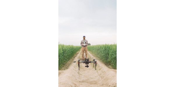 Drones help researchers stay on top of wheat
