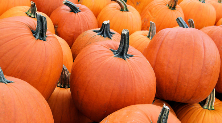 An ancient event in pumpkin evolution