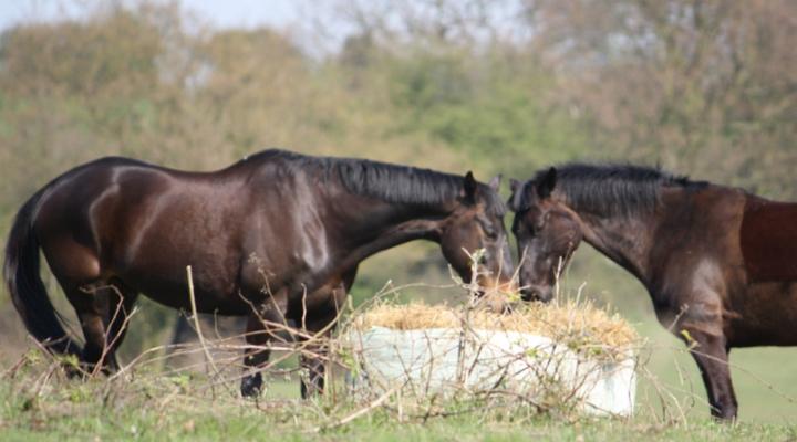 Equine Forage Quality Meetings