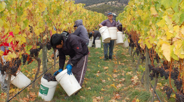 Wildfires affect vineyard workers and owners