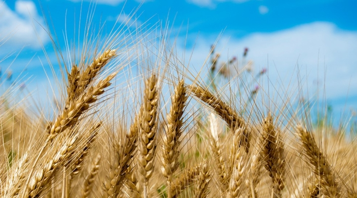2017 Fall Wheat Industry Conference