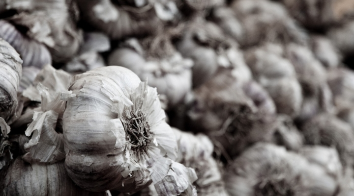 Eighth Annual Garlic Festival