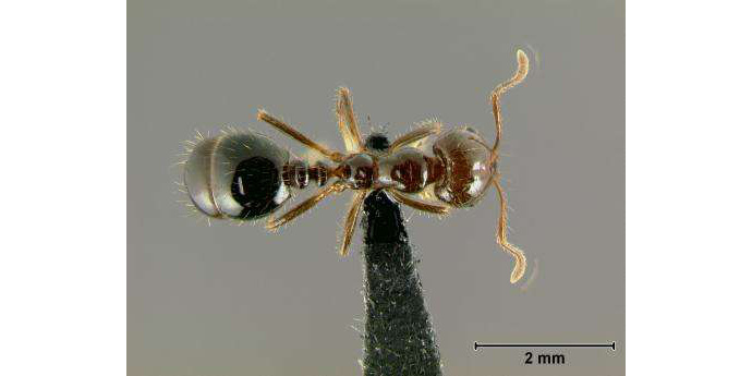 ODAFF to host second fire ant meeting