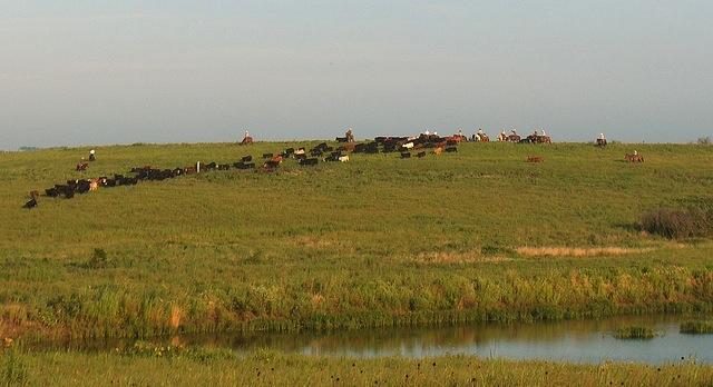 Ranching events next week in Texas Plains
