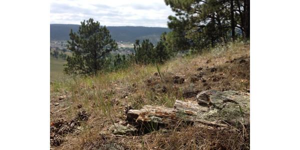 Nov. 20 deadline for community forestry grant