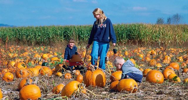 Pumpkins have uncommon evolutionary history