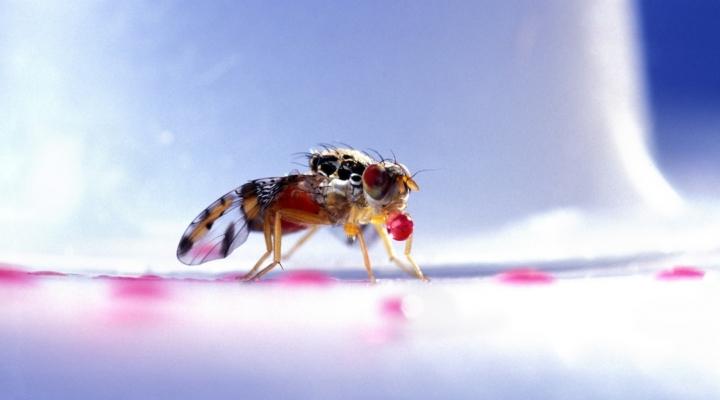 Medfly infestation triggers quarantine