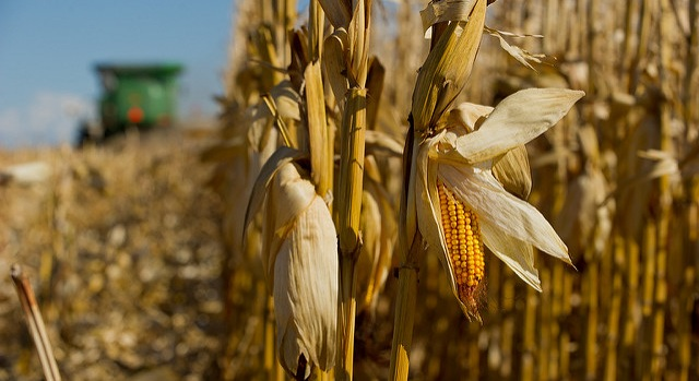 USDA issues safety-net payments to NYS farmers