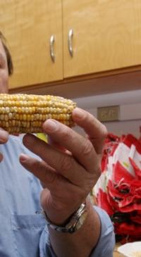 Research on heat-tolerant corn wins award
