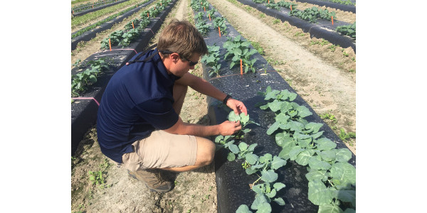 As a child, Zack Snipes picked peaches each summer on his parents' farm. Today, he conducts research on them as well as a variety of other fruits and vegetables. (Courtesy of Clemson University)