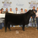 The Grand Champion Heifer was a Low Percentage Simmental exhibited by Whitney Walker of Prairie Grove, Arkansas. (Courtesy of World Beef Expo)