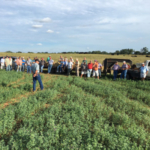 Farmers gather at Tokeena Farm in Seneca to learn about a Clemson study involving growing alfalfa with bermudagrass to increase forage quality. (Image Credit: Clemson University Public Service and Agriculture)