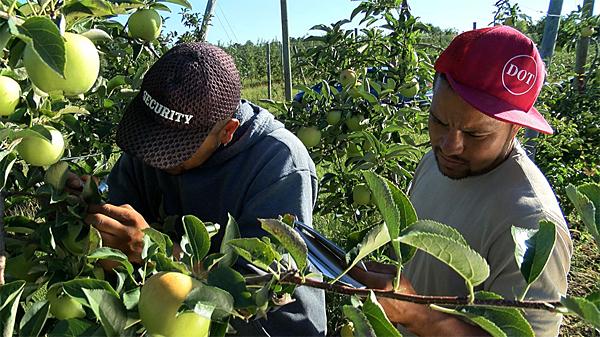 Horticulture training for Spanish speakers