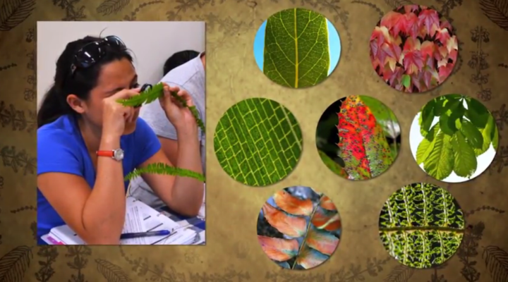 Free invasive plants tool kit for teachers