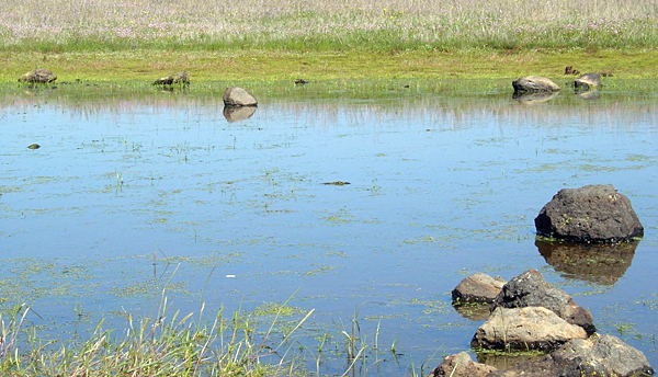 USDA initiative can help improve water quality