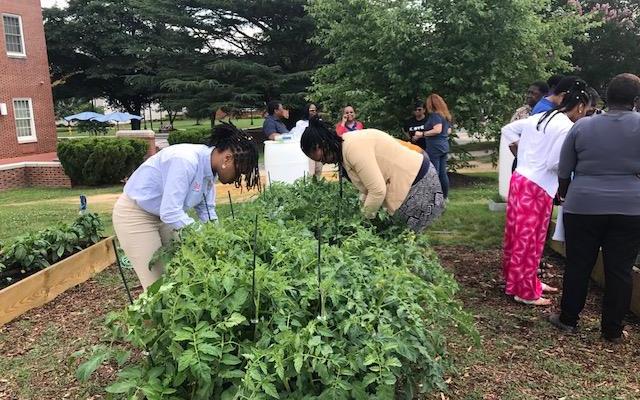 VSU's campus garden wraps up first year