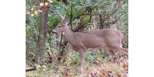 Safe handling practices of wild game meat