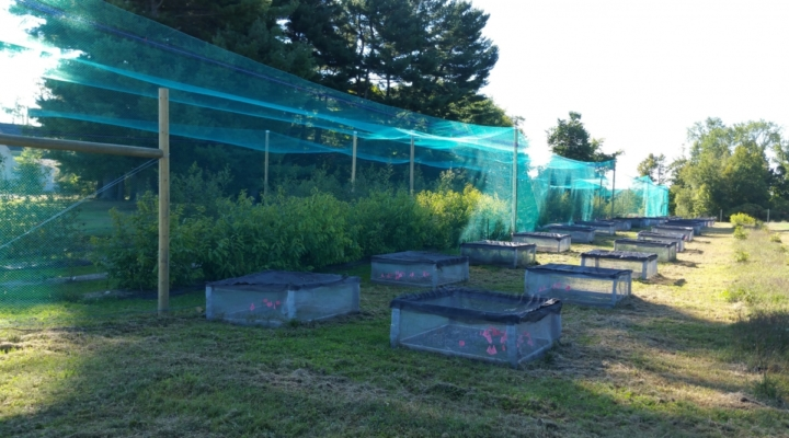 UNH researchers receive USDA grant