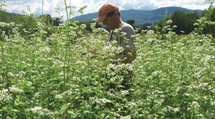 Northeast SARE Invites Farmer Grant Applications