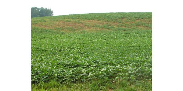 2017 field and forage crop season