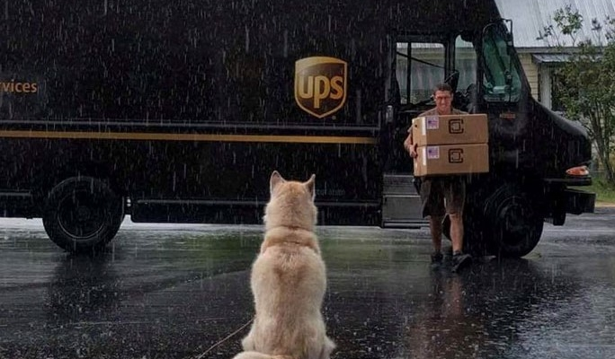 UPS has Facebook group about dogs they meet on their routes