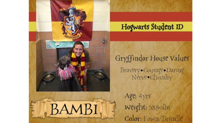 Shelter sorts dogs into Hogwarts-themed houses