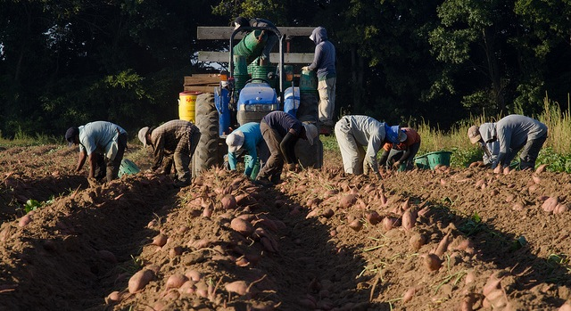 Court to decide legality of farm worker law