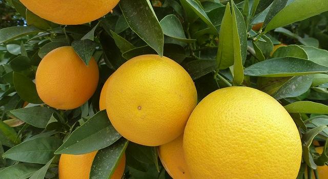 Vacancies on CDFA citrus committee