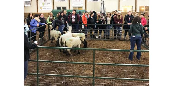 'Girls' Night on the Farm' held
