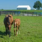 Mare and foal in field. (PHOTO: Matt Barton)