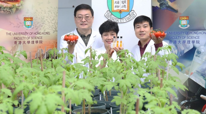 Researchers enhance antioxidants in tomatoes