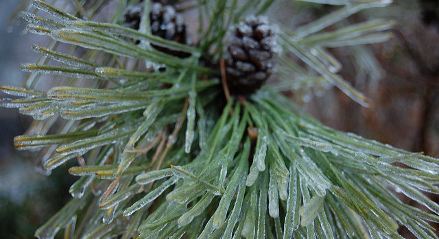 Local Christmas Tree Farm Offers Full Holiday Preparations