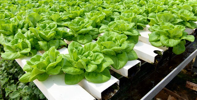 Purists assail organic designation for hydroponics