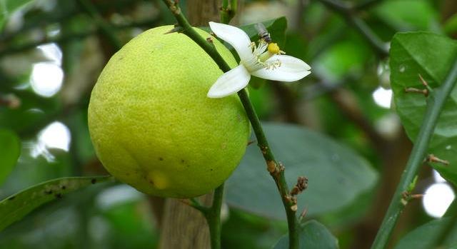 UF/IFAS Citrus REC celebrates 100 years