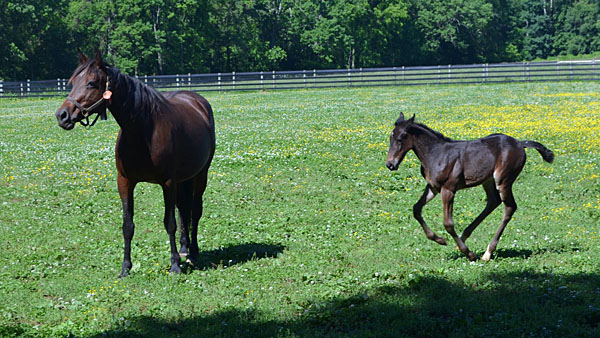 Equine scholarship offered to 4-H, FFA members