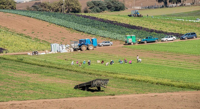 Calif. farm plans to appeal pro-labor ruling