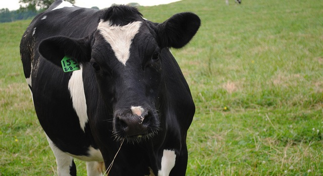 Statement on Okeechobee Co. dairy farms