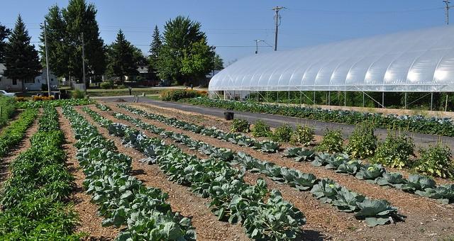 Urban farms across Massachusetts earn support