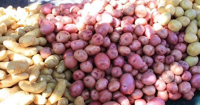 USDA NIFA invests in canola, potato, alfalfa crops