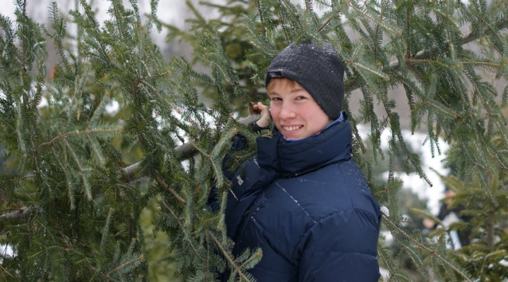 CT Christmas tree growers opening for season