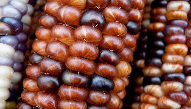 New method analyzes corn kernel characteristics