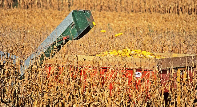 Grain exports yield $55.5B in economic output